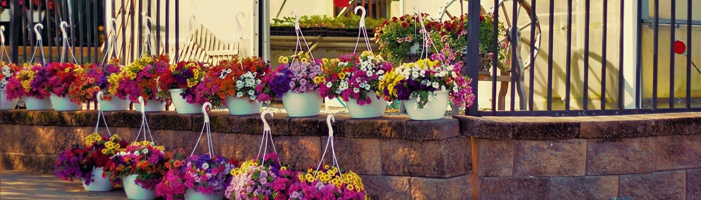 flowers outside greenhouse entrance